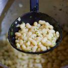 Les Haricots Blancs Lingots Cuisinés à la Graisse de Canard