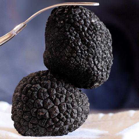 Les Truffes Noires du Périgord Entières Brossées 1er Choix